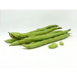 Habas vaina verde (kilo)