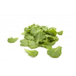 Brotes de batavia verde...