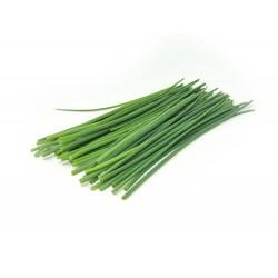 Cebollino (bandeja)